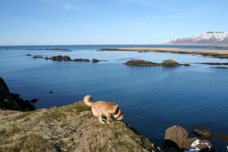 Borgarvík og Músarnes og Anriðarey fjær