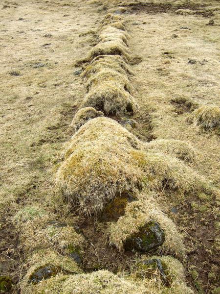 Friðlýstur garður við Brúsastaði