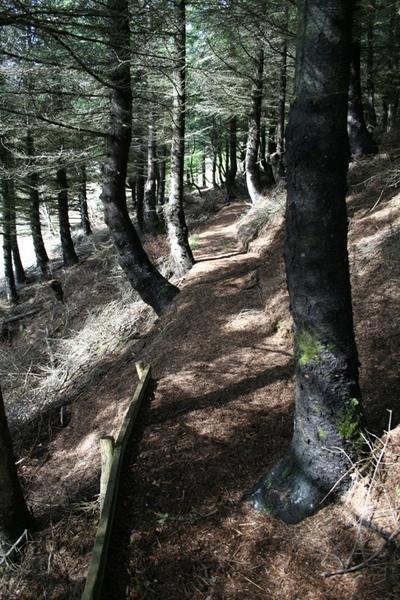 Stigur í skogi