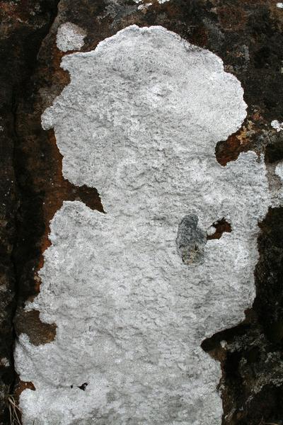 Púðabreyskja við Klifsholt