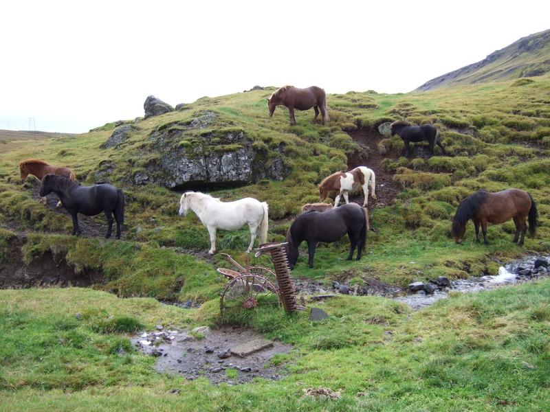 Dýralíf við bæjarlækinn að Fremra-Hálsi