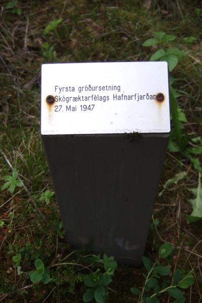 Spjald við fyrsta tré sem plantað var í Gráhelluhraunsskógi