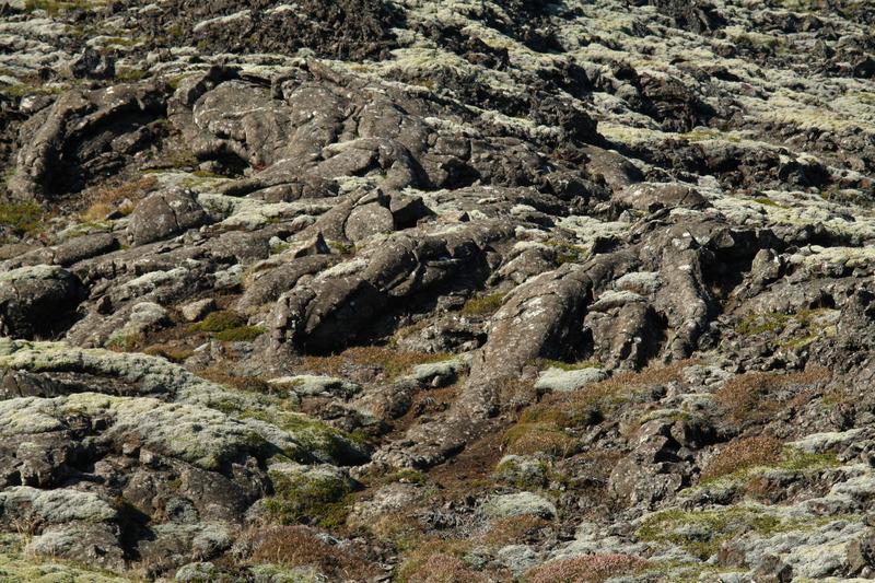 Hraunæðar utan í Höfða