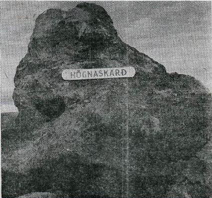 Hognaskard-221