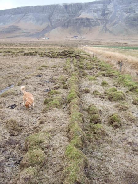 Garður eða hluti áveitu við Hurðarbak