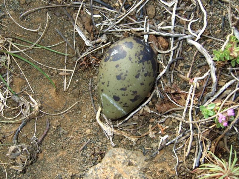 ...og eggið
