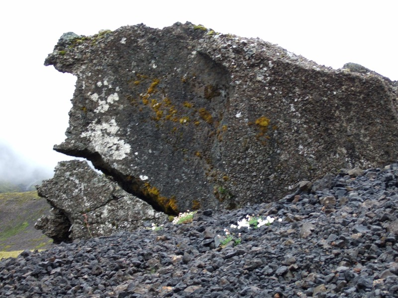 Hvalslíki við suðvestanvert Hvalvatn