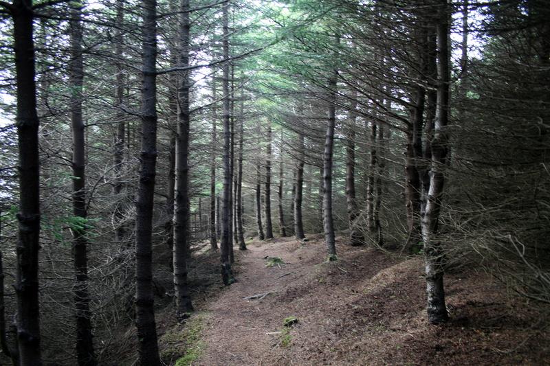 Gengid um skoginn
