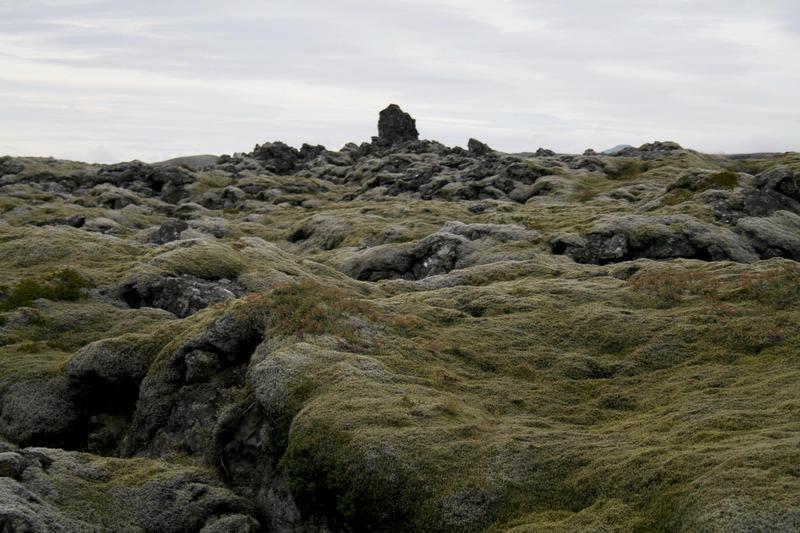 Hraungambri í Brunanum