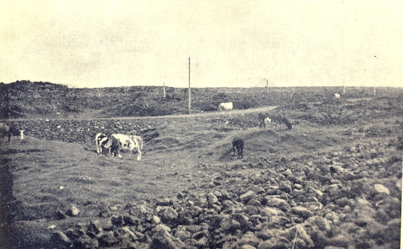 Kúagerði