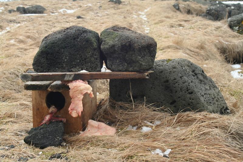 Minkagildra við Lónakot