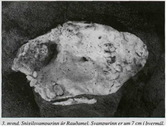 Rauðamelur