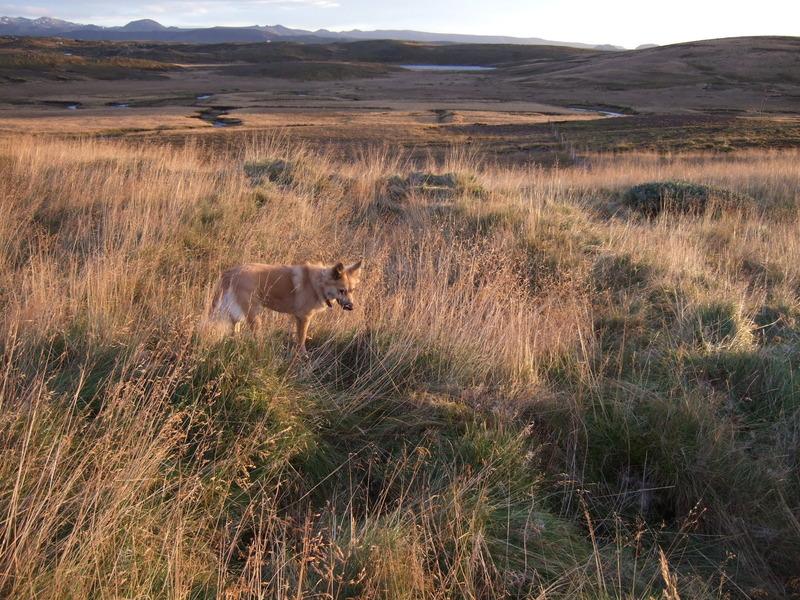 Fjárhústóft (sauðahús) frá þormóðsdal